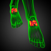 3d render medical illustration of the midfoot bone — Stock Photo