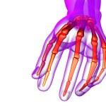 3d render illustration of the skeleton hand — Stock Photo #68438379