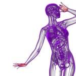 3d render illustration of the skeleton hand — Stock Photo #68438423