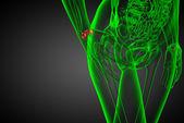 3d rendered illustration of the human carpal bones — Stock Photo