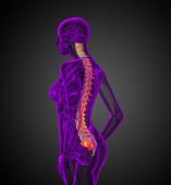 3d render medical illustration of the human spine — Foto de Stock