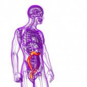 3d 渲染医学插图的人类大肠癌 — 图库照片