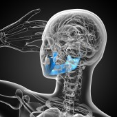 3D medical illustration of the jaw bone — Stock Photo