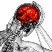 3D medical illustration of the brain   — Stock Photo