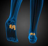 3d 渲染医学插图的足弓骨 — 图库照片