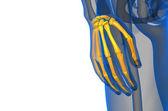 3d render illustration of the skeleton hand  — Stock Photo