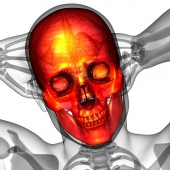 3d render Medikal illüstrasyon kafatası — Stok fotoğraf
