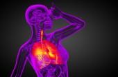 3d göra medicinsk illustration av mänskliga andningsorganen — Stockfoto