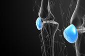 3d illustration médicale de rendu de l'os de la patella — Photo