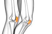 3d render medical illustration of the patella bone — Stock Photo