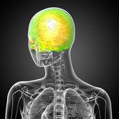 3d render de ilustración médica de la parte superior del cráneo — Foto de Stock