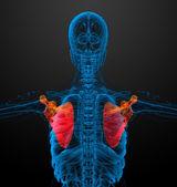 3d render medical illustration of the scapula bone  — Foto de Stock