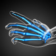3d render illustration of the skeleton  hand — Stock Photo #68537711