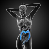 Human digestive system large intestine — Stock Photo