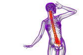 3d render medical illustration of the human spine  — Стоковое фото