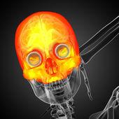 3d render medical illustration of the upper skull — Stock Photo