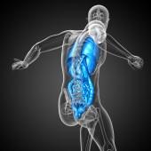 3d vykreslení lékařské ilustrace lidské trávicí soustavy a — Stock fotografie