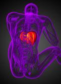3d render medical illustration of the liver — Stock Photo