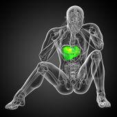 3d render medical illustration of the liver  — Stock fotografie