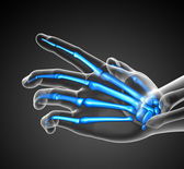 3d render illustration of the skeleton  hand — Stock Photo