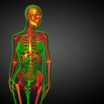 3d render medical illustration of the skeleton bone — Stock Photo #68542483