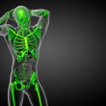 3d render medical illustration of the skeleton bone — Stock Photo #68542519