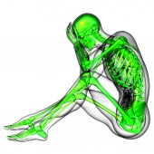 3D medical illustration of the human skeleton — Stock Photo