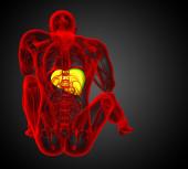 3d render medical illustration of the liver  — 图库照片
