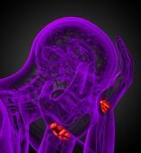 3d tavené ilustrace lidských karpálního kostí — Stock fotografie