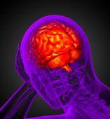3d render medical illustration of the brain — Stock Photo