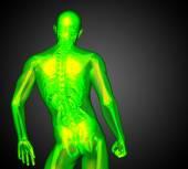3d render medical illustration of the human anatomy — Foto de Stock