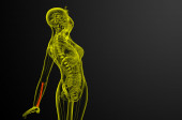 3d render medical illustration of the radius bone  — Stock Photo