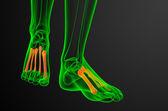 3d render medical illustration of the metatarsal bones — Stock Photo
