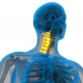 3d render medical illustration of the cervical spine — ストック写真
