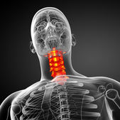 3d render medical illustration of the cervical spine — Foto de Stock