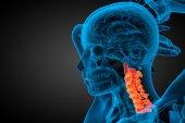 3d render medical illustration of the cervical spine — Stock Photo