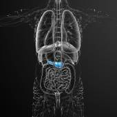3d render medical illustration of the gallblader and pancrease — Stock Photo