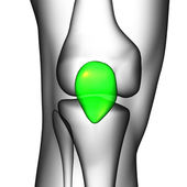 3d render medical illustration of the patella bone — Stock Photo