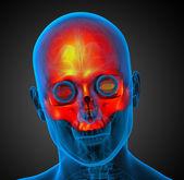 3d визуализации медицинской иллюстрации верхней черепа — Стоковое фото