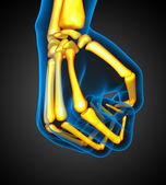 3D medical illustration of the human skeleton hand — Stock Photo