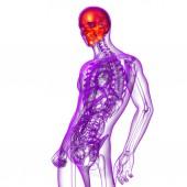 3d render ilustração médica do crânio — Fotografia Stock
