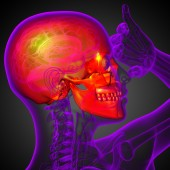 3d render medical illustration of the skull  — Stock Photo