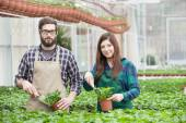 Male and female florist — Stock Photo