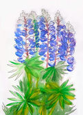 Bouquet of blue lupines — Stock Photo
