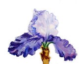 Iris with watercolor blue petals  — Stock fotografie