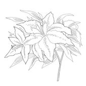 Lilies.Sketch black and white — Vector de stock