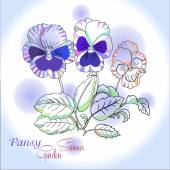 Pansy on blue  background — Stock Vector