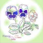 Pansy on green background — Stock Vector
