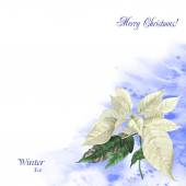 Watercolor background  with poinsettia  — Stock Photo