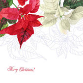 Watercolor background  with poinsettia flowers — Stock Photo